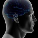 Saçmalık: Beynimizin sadece %10 unu mu kullaniyoruz?